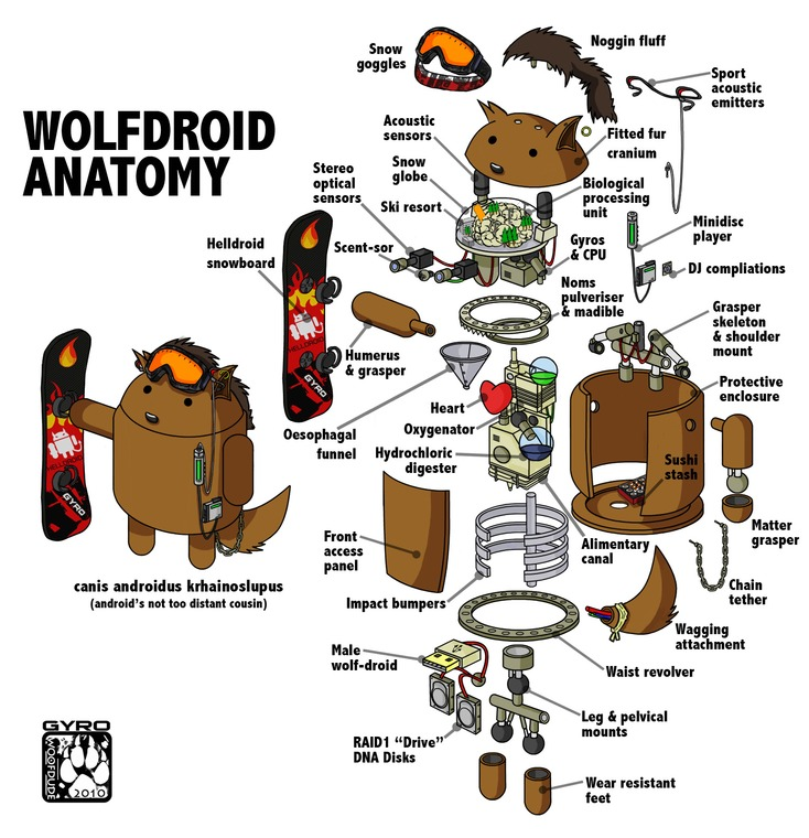 Wolfdroid Anatomy